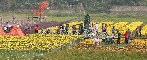 Việt Nam tưng bừng chào đón Năm mới 2014 - ảnh 3