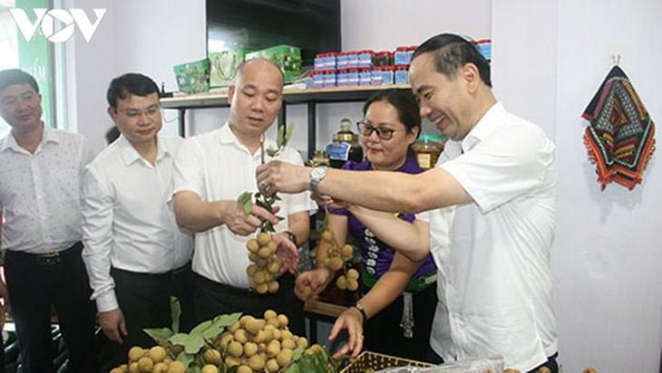 Nông sản Sơn La vươn xa, đón lợi thế từ Hiệp định EVFTA - ảnh 2