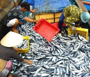 Nâng cao năng lực phát triển ngành thủy sản Việt Nam - ảnh 1