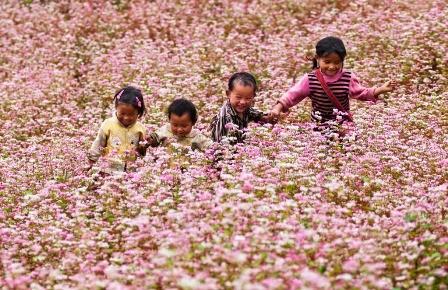 เที่ยวห่ายางชมทุ่งดอกไม้ดอกตามยากแหมกหรือดอกบักวีต - ảnh 1