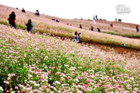 เที่ยวห่ายางชมทุ่งดอกไม้ดอกตามยากแหมกหรือดอกบักวีต - ảnh 3