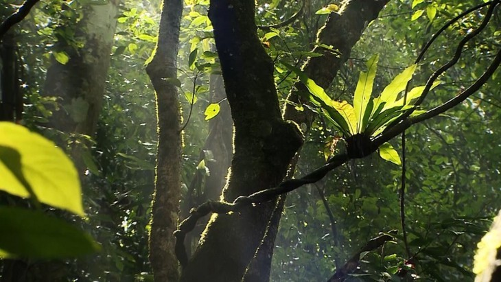 Two more biosphere reserves in Vietnam earn UNESCO recognition - ảnh 12