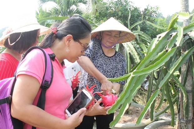 Город Биньтхуан развивает сельский туризм - ảnh 1