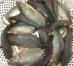 Bình dị và ngọt lành canh bánh đa cá rô đồng - ảnh 5