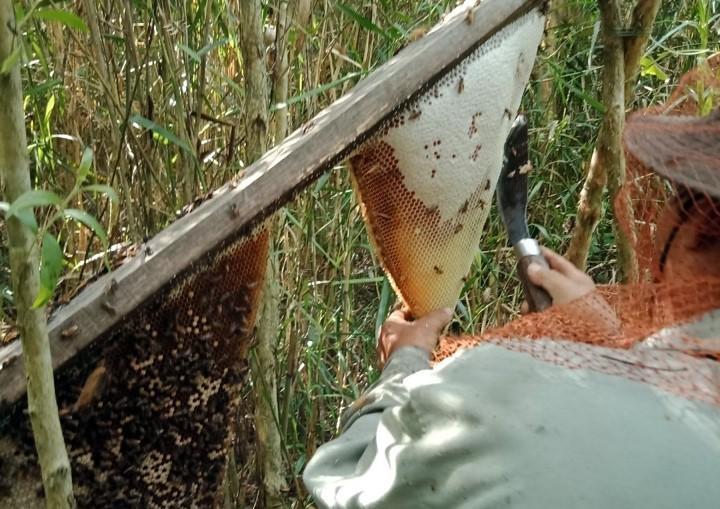 Phát huy và bảo tồn Nghề gác kèo ong - Di sản Văn hóa phi vật thể quốc gia  - ảnh 1