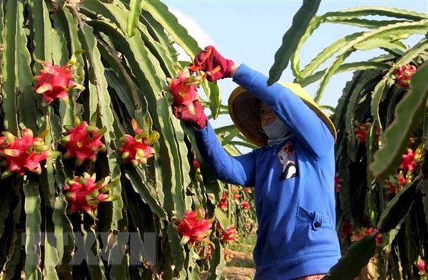 EVFTA mở ra cơ hội kinh doanh cho Bỉ và Việt Nam - ảnh 1