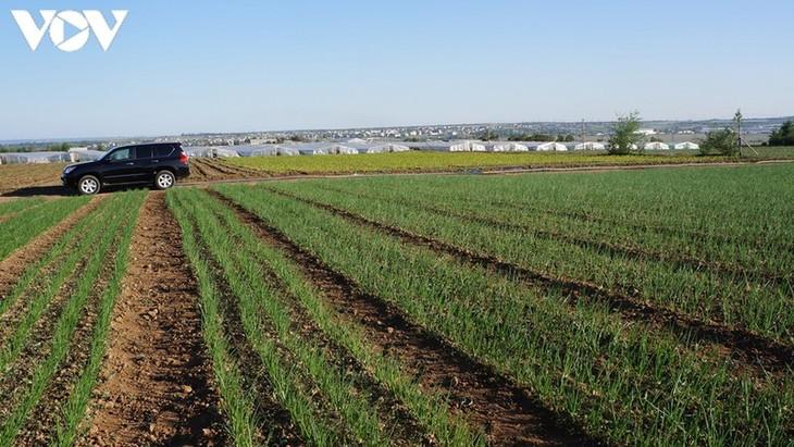 Đầu tư vào nông nghiệp-sinh kế lâu dài cho cộng đồng người Việt tại Nga - ảnh 2