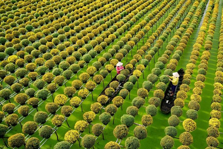 Những làng hoa ngày giáp Tết - ảnh 4