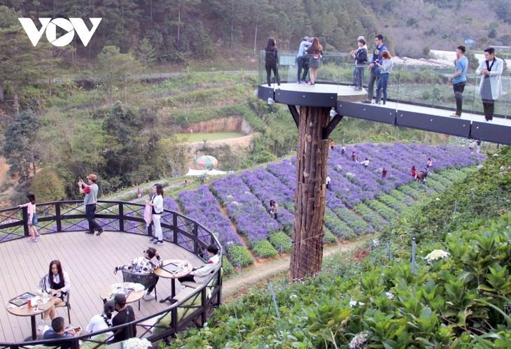 Du lịch canh nông ở Lâm Đồng - ảnh 1