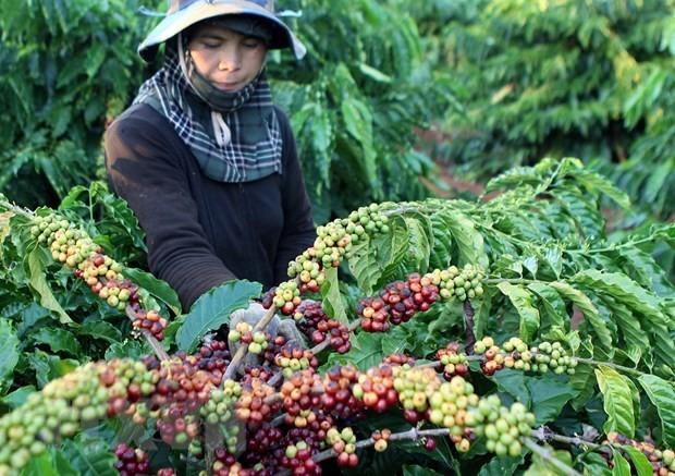 Việt Nam hợp tác mở rộng thị trường xuất khẩu nông sản thực phẩm  - ảnh 1