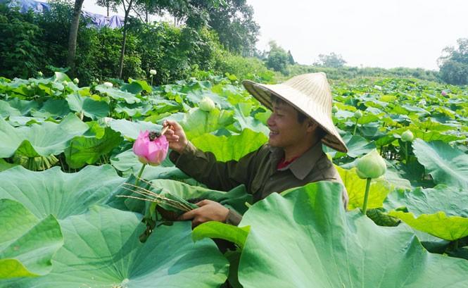黎山海为太原茶产品打开新的发展方向 - ảnh 3