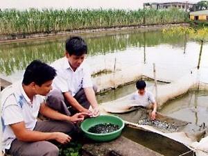 Ứng dụng tiến bộ kỹ thuật sản xuất giống cá lăng chấm bằng phương pháp sinh sản nhân tạo - ảnh 1
