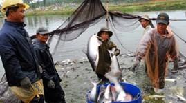 VASEP kêu gọi DOC công bằng khi áp thuế với cá tra Việt Nam - ảnh 1