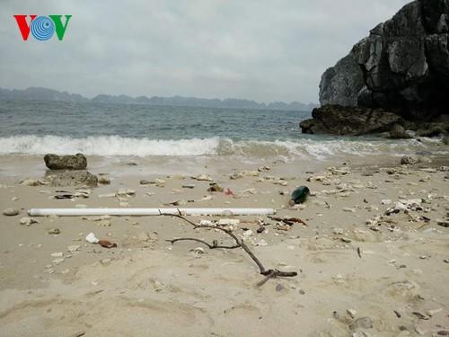 Русские туристы очистили от мусора побережье острова Катба - ảnh 1