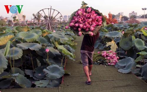 ภาพดอกบัวในกรุงฮานอย - ảnh 10