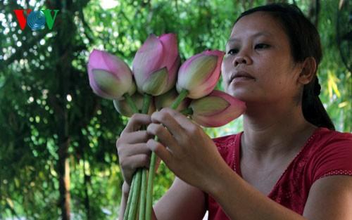 ภาพดอกบัวในกรุงฮานอย - ảnh 12