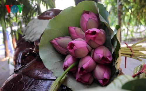 ภาพดอกบัวในกรุงฮานอย - ảnh 13