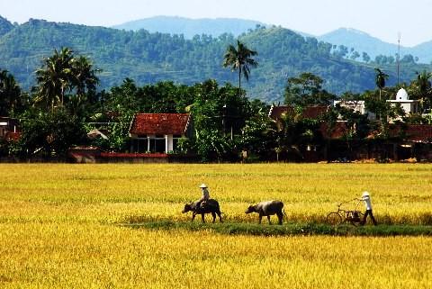 บรรยากาศการดำเนินชีวิตของหมู่บ้านเวียดนาม - ảnh 1