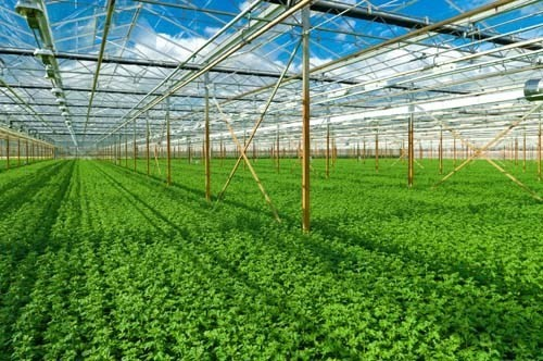 Greening agriculture - ảnh 1