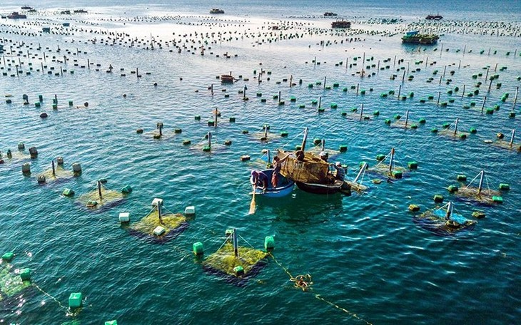Aquaculture to become large-scale production sector - ảnh 1