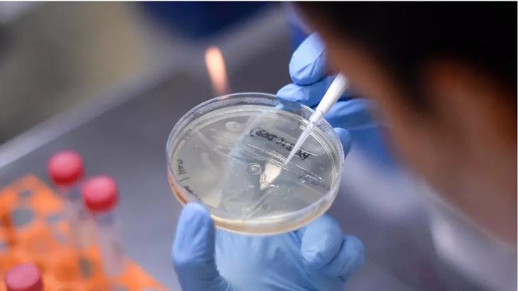 全球要努力合作研发新冠肺炎疫苗 - ảnh 1