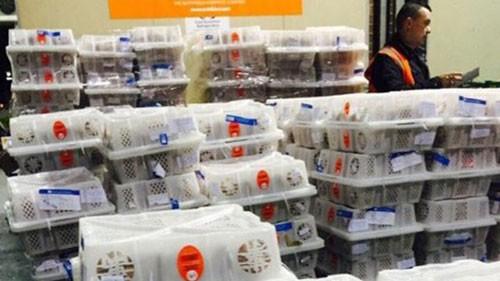 Vietnam exports litchi to Australia - ảnh 1