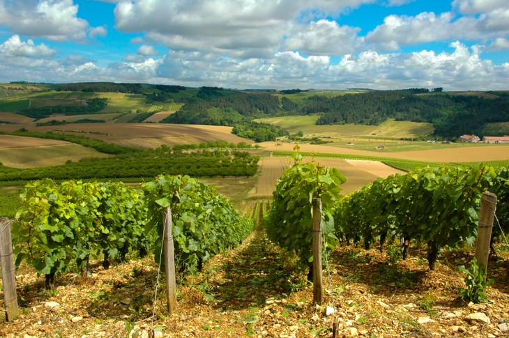 An insight into French wine - ảnh 2