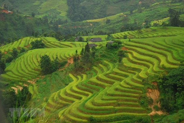 Associations jointly promote local tourism - ảnh 1