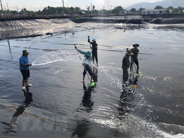 Vietnam to become world's key shrimp producer - ảnh 1