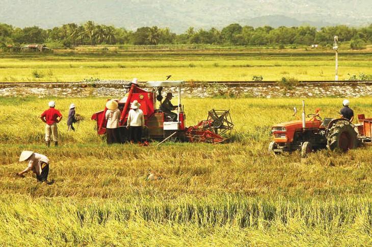 Mecanización eleva la producción agrícola y mejora la vida de campesinos - ảnh 1