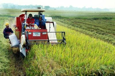 Reajustar acápites para mejorar las áreas rurales vietnamitas  - ảnh 1