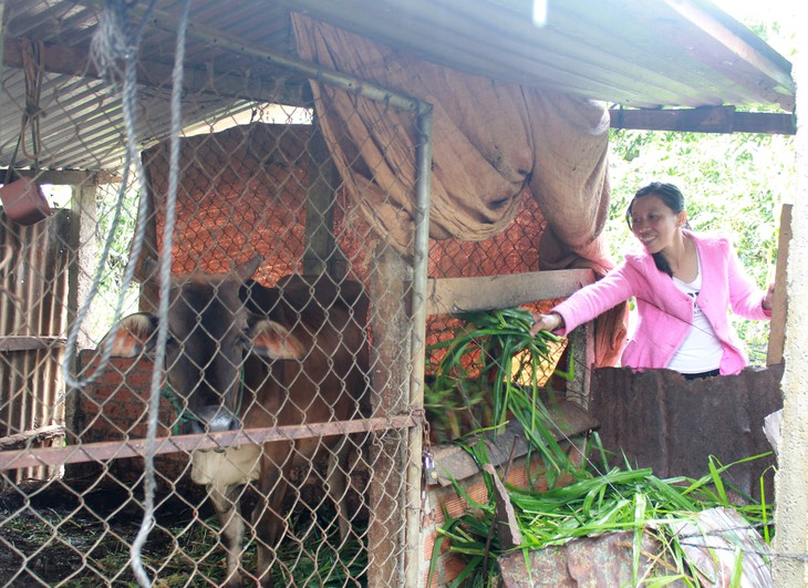 Actividades prácticas en apoyo a las víctimas vietnamitas del agente naranja - ảnh 1