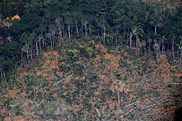 Brasil pide más inversión internacional para prevenir la deforestación del Amazonas - ảnh 1