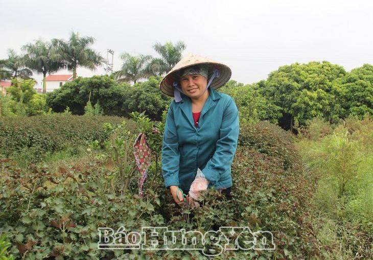 Van Lam – Kembangkan Ekonomi dengan Kerajinan Tradisional - ảnh 2