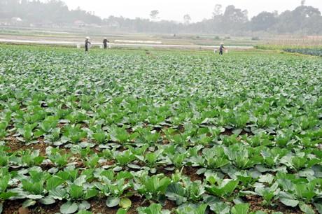 สร้างเขตผลิตสินค้าเกษตรหลัก:วิธีปฏิบัติที่น่าเรียนรู้ในจังหวัดกว๋างนิง - ảnh 1