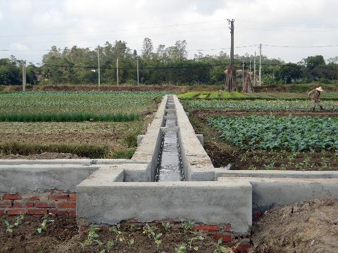 สร้างเขตผลิตสินค้าเกษตรหลัก:วิธีปฏิบัติที่น่าเรียนรู้ในจังหวัดกว๋างนิง - ảnh 2