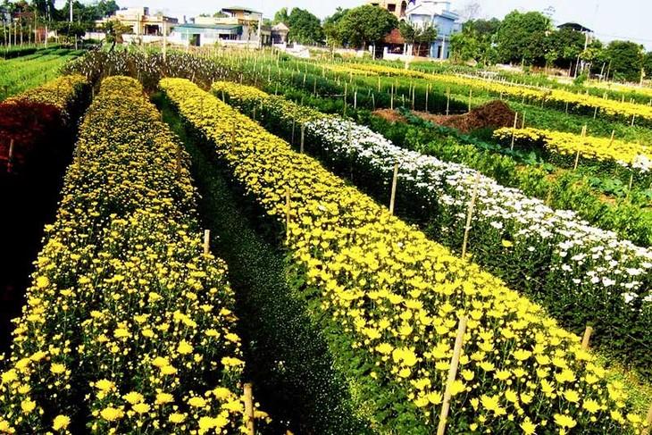 หมู่บ้านปลูกดอกไม้ฝู่เวินพัฒนาอาชีพปลูกดอกไม้ควบคู่กับการพัฒนาการท่องเที่ยว - ảnh 1