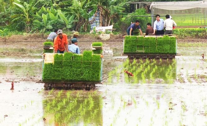 เกษตรกรในเขตชานเมืองกรุงฮานอยส่งเสริมการใช้เครื่องจักรกลในการผลิตเกษตร - ảnh 1