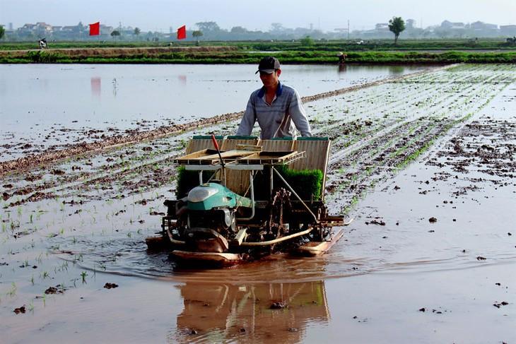เกษตรกรในเขตชานเมืองกรุงฮานอยส่งเสริมการใช้เครื่องจักรกลในการผลิตเกษตร - ảnh 2