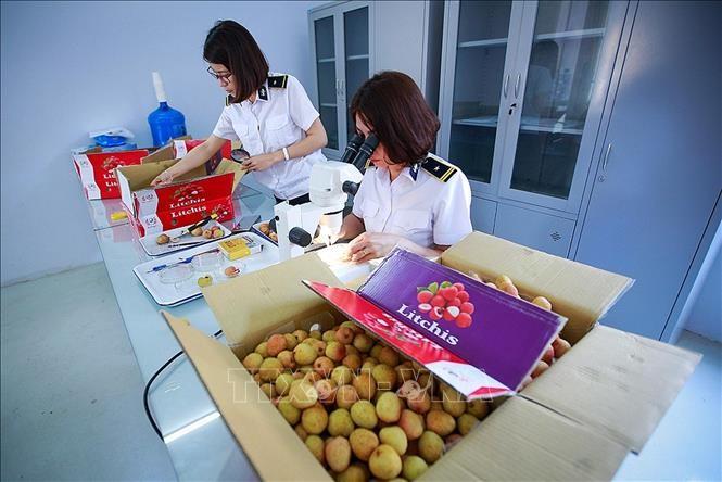 เวียดนามเป็นหนึ่งในหุ้นส่วนเศรษฐกิจที่น่าสนใจของออสเตรเลีย - ảnh 1