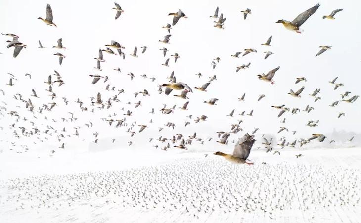 ภาพถ่ายบึงน้ำเค็ม ตามยาง ได้รับรางวัลที่ 1 ในการประกวดภาพถ่ายทางอากาศระหว่างประเทศ - ảnh 1