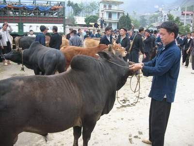 Tiermarkt in Meo Vac  - ảnh 1