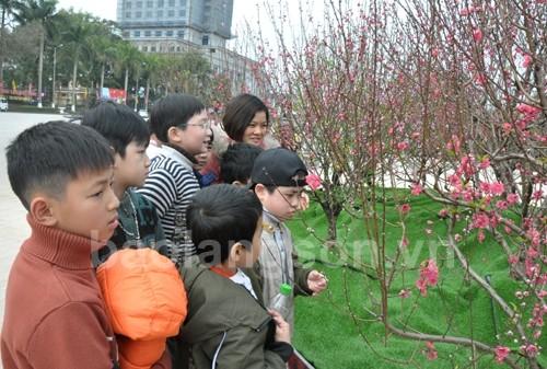 Fest der Pfirsichblüte in Provinz Lang Son - ảnh 1