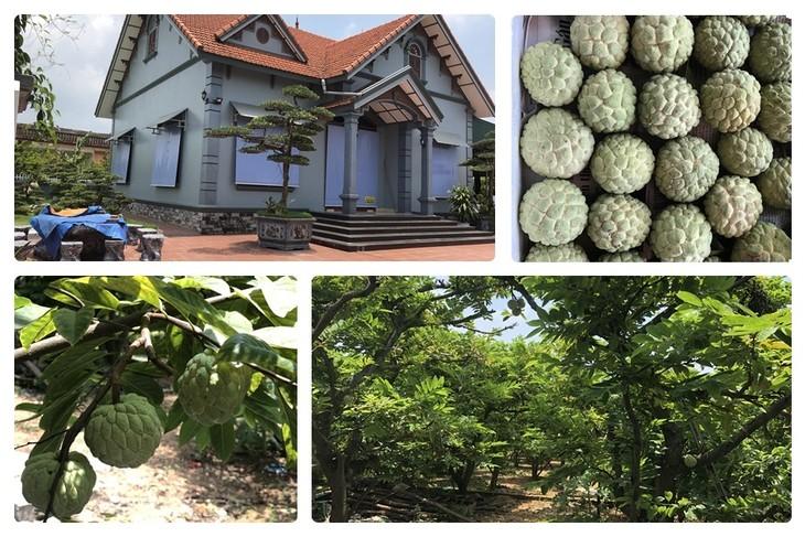 Gemeinde Viet Dan ist erstes Model bei Neugestaltung ländlicher Räume in Vietnam - ảnh 1
