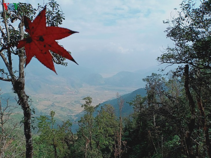 Stille Atmosphäre im Kreis Mu Cang Chai im Winter - ảnh 6