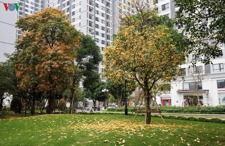 Die romanische Schönheit der Stadt Hanoi in der Zeit, in der Bäume ihre Blätter wechseln - ảnh 1