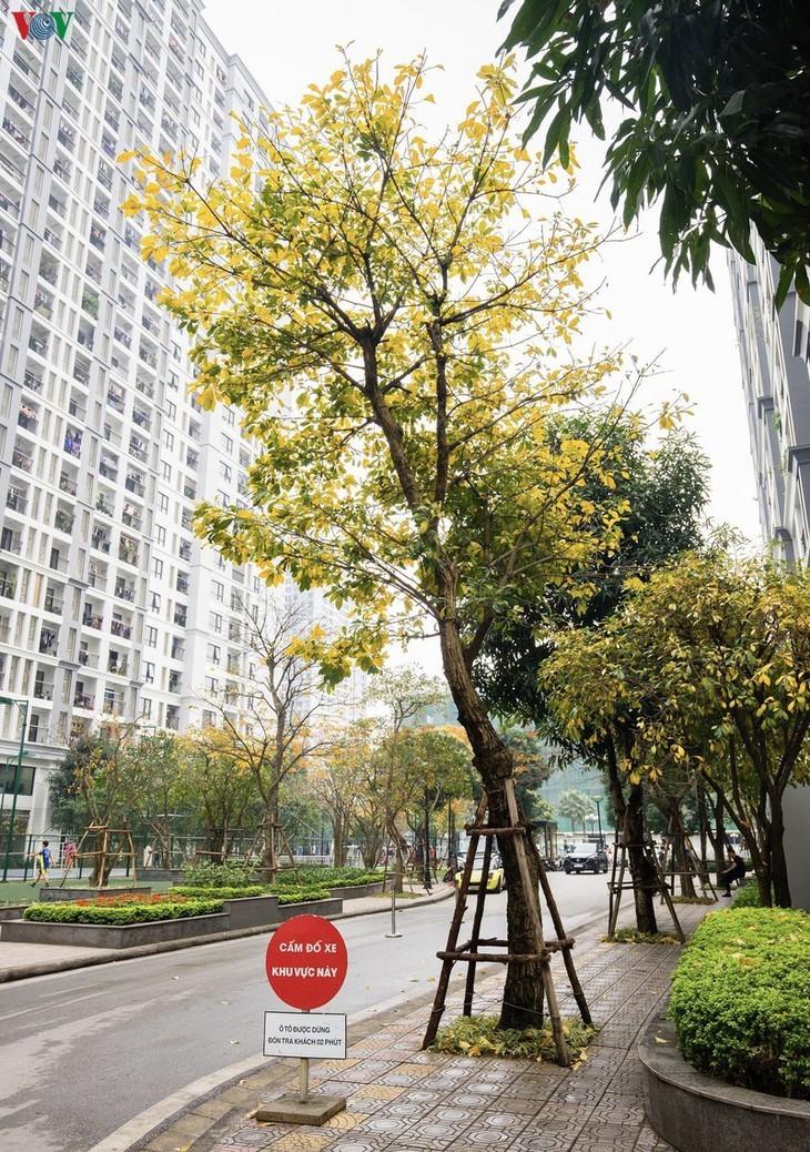 Die romanische Schönheit der Stadt Hanoi in der Zeit, in der Bäume ihre Blätter wechseln - ảnh 5