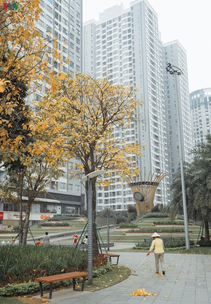 Die romanische Schönheit der Stadt Hanoi in der Zeit, in der Bäume ihre Blätter wechseln - ảnh 7