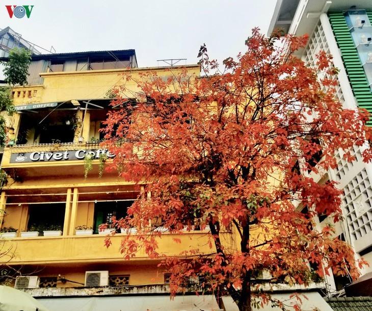 Die romanische Schönheit der Stadt Hanoi in der Zeit, in der Bäume ihre Blätter wechseln - ảnh 9