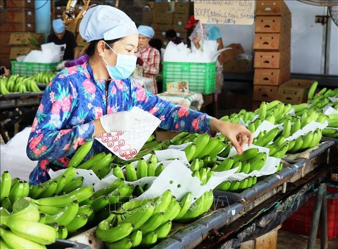 Wert des Exports von Obst und Gemüse beträgt zirka zwei Milliarden US-Dollar - ảnh 1